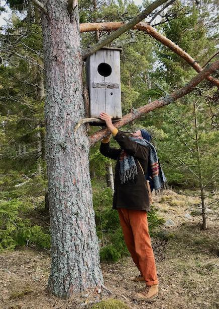 Mann hängt Nistkästen an Baum auf